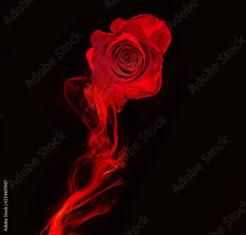fototapeta na ścianę rose and swirl of red smoke isolated on black background