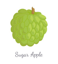 Sugar-Apple, Sweetsop Custard Apple Isolated Icon