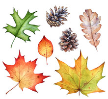 Watercolor Collection Of Autumn Leaves And Pine Cones On White Background.
