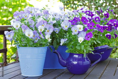 Acrylic Prints Pansies Purple, blue and violet pansy flowers in 3 pots and an enameled jug on a wooden balcony table in spring, background template