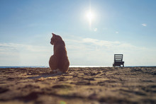 Silhouette Of Big Red Cat On The Sand On The Beach On The Sea And Small Sunbed Background