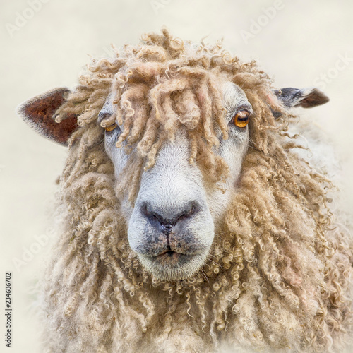 Canvas-taulu Portrait of a Leicester Longwool Sheep with Textures added