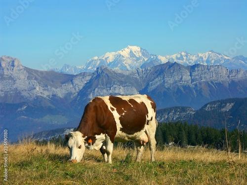 Papiers peints Vache une vache montbéliarde en alpage