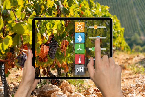 A farmer is holding a tablet on the background of a vineyard