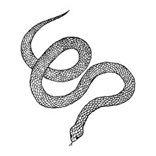 Hand Drawn Vintage Snake, Vect...