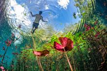 Underwater Gardens And Water P...