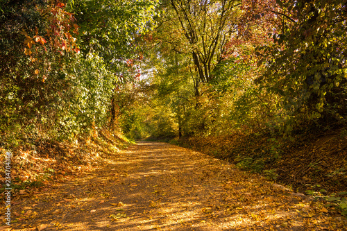 Foto  Intense colorful autumn atmosphere on leaf covered path through forest
