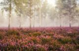 Pustać Lüneburska - wrzos i mgła (prosto z symbolem zastępczym) - 234706380