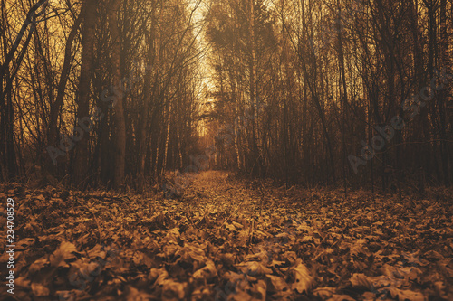 Montage in der Fensternische Dunkelbraun The road in the dark, autumn forest. Concept of autumn, cold, yellow leaves, autumn mood. Copy space.