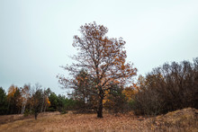 Autumn Landscape, Forest, Field, Gloomy Day. Concept Of Autumn, Cold, Yellow Leaves, Autumn Mood, Sadness. Copy Space.