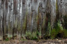 Old, Wooden Background, Old Boards Covered With Moss, Mold, Rot. The Concept Of Time, Fungus, Unsanitary Conditions, Old Age.