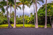 Palm Trees At Punaluu Black Sa...