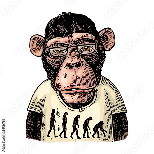 Cuadros en Lienzo Monkeys dressed in a T-shirt with the theory of evolution on the contrary