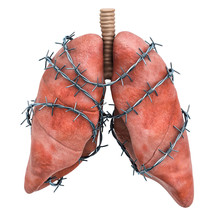 Lungs Pain Concept. Human Lungs With Barbed Wire. 3D Rendering