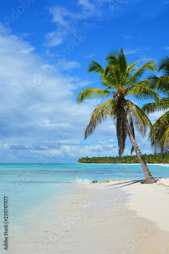 Ingelijste posters Caraïben beach, palm, tropical, sea, island, tree, ocean, sand, travel, sky, paradise, water, vacation, landscape, blue, summer, coconut, nature, coast, palm tree, holiday, caribbean, beautiful, relax, sunny