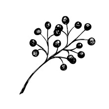 Vector Hand Drawn Sketch Holly, Branch With Berry, Mistletoe Isolated On A White Background.. Christmas, New Year Holiday Celebration Symbol.