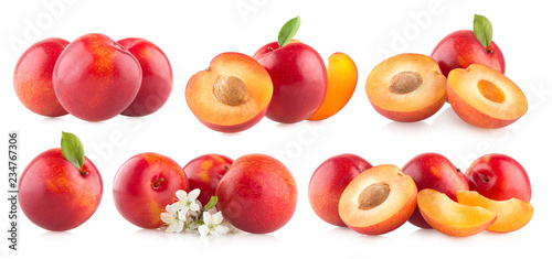 Red plums Canvas Print