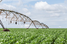 Soybean Plantation In The Brazilian Midwest With Artificial Irrigation.