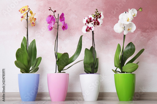 Papiers peints Orchidée Beautiful tropical orchid flowers in pots on floor near color wall