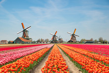 Landscape Of Netherlands Bouqu...