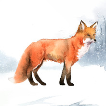 Hand-drawn Fox In The Snow Watercolor Style