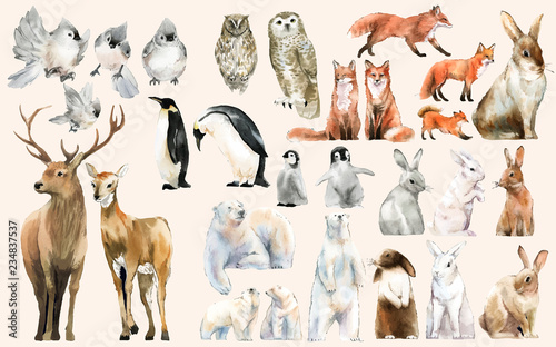 Hand-drawn wildlife set watercolor style - 234837537