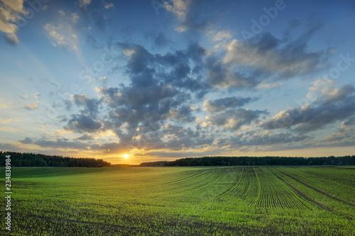 Foto auf Gartenposter Landschappen Idyllic view, foggy rolling fields at sunrise