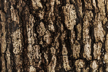 The Bark Of A Tree Background