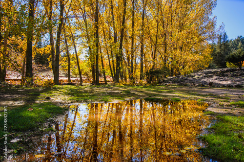 Foto op Canvas Herfst Beautiful romantic alley in a park with colorful trees and sunlight. autumn natural background