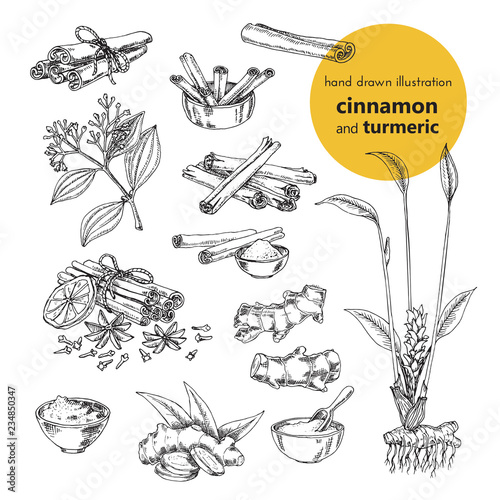 Fotomural hand drawn vector illustration of herbs and spices
