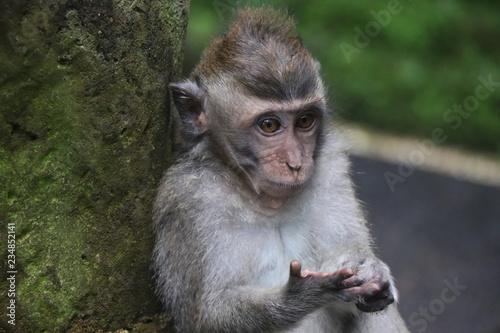 cute baby ape monkey primate Canvas Print