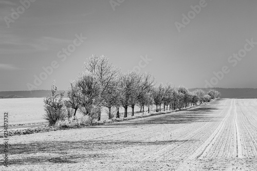 Spoed Foto op Canvas Donkergrijs alley in winter landscape covered with snow