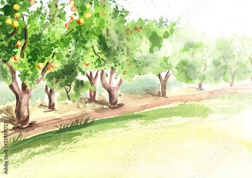 Stampa su Tela Apple garden in perspective. Hand drawn watercolor  background
