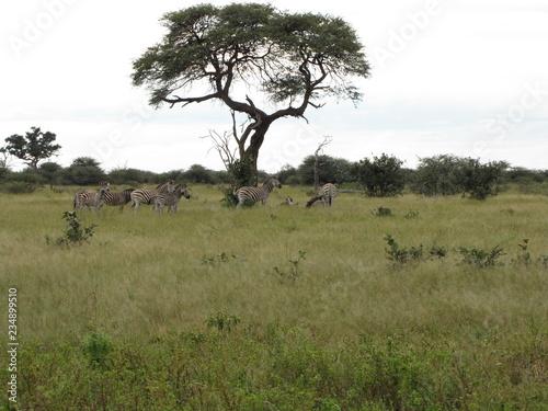 Poster Afrique Afrika Tiere Natur