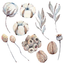 Watercolor Winter Foliage  Collection