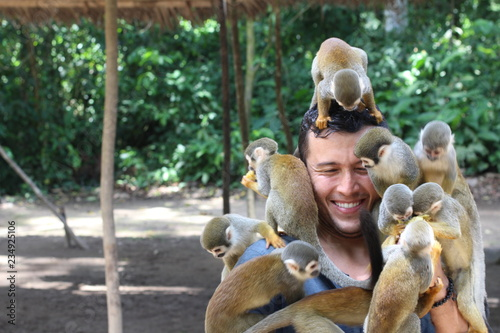 Group of monkeys playing with a man