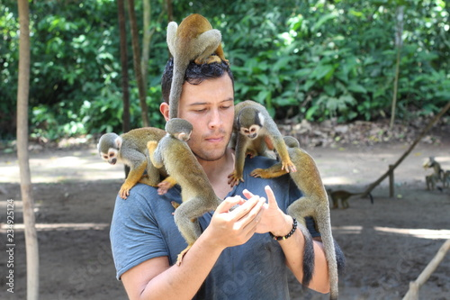 Man training a group of monkeys