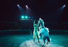 Horses In The Circus. Speech Horses With Trainers On The Stage Of The Circus.