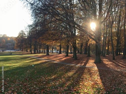 Bois de la Cambre en automne, Bruxelles