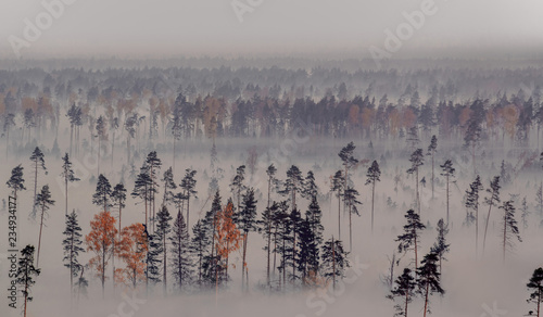 Poster Morning with fog Forest and creeping fog. The view from the height of bird