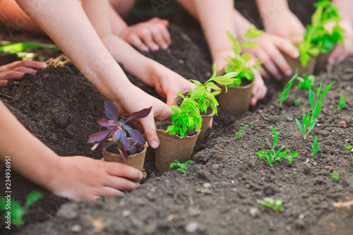 Obraz Children's hands planting young tree on black soil together as the world's concept of rescue - fototapety do salonu