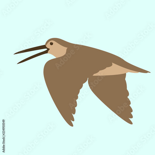 woodcock in flight , vector illustration , flat Canvas Print