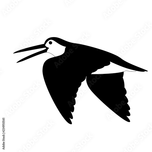 Valokuva  woodcock in flight , vector illustration , black - white