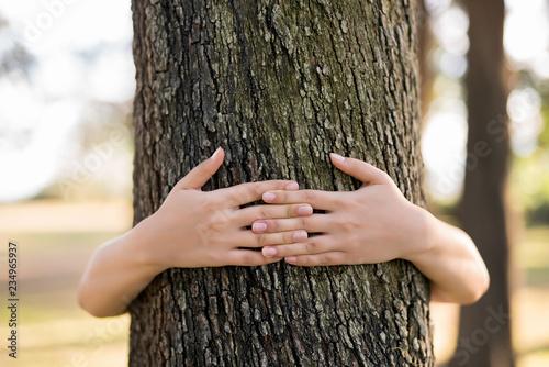 Fotografía  Closeup hands of woman hugging tree with sunlight