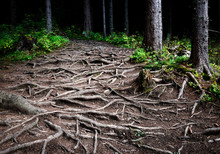 Intertwined Roots Of Trees