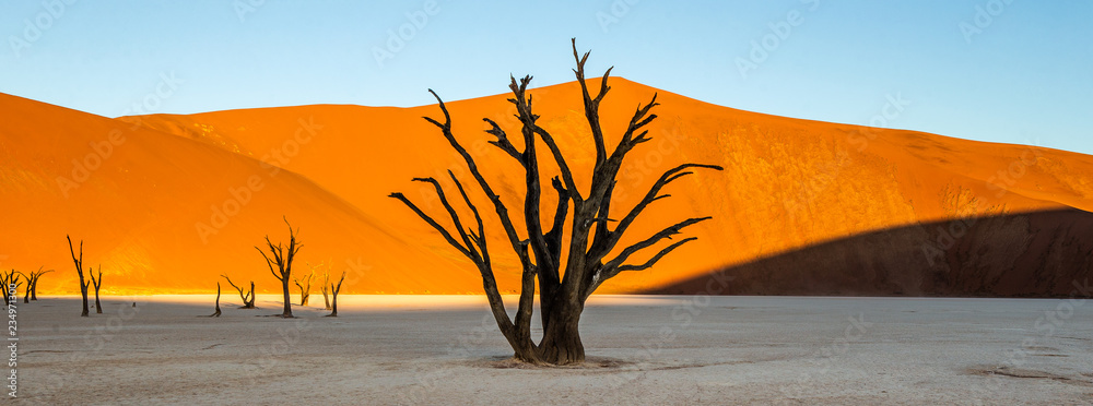 Dead acacia Trees and red dunes in Deadvlei. Sossusvlei. Namib-Naukluft National Park, Namibia.