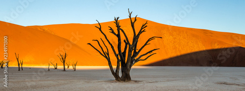 Photo sur Toile Desert de sable Dead acacia Trees and red dunes in Deadvlei. Sossusvlei. Namib-Naukluft National Park, Namibia.