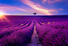 Lavendelfeld In Der Provence B...
