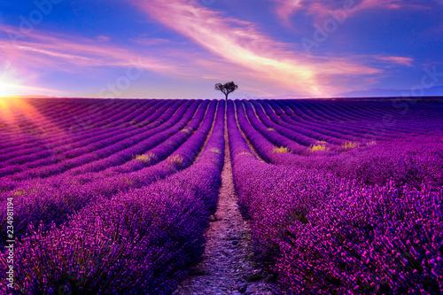 Obraz premium Lawendowe pole w Prowansji o zachodzie słońca