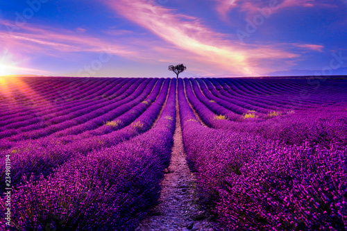 Tuinposter Lavendel Lavendelfeld in der Provence bei Sonnenuntergang